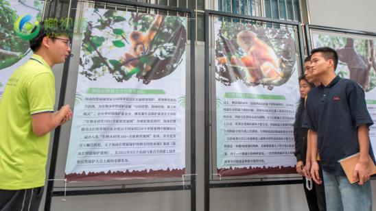 """海南举办2021年""""国际长臂猿日""""公益科普活动 呼吁关注保护海南长臂猿"""